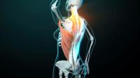 VIDEO : Votre ostéopathe à Paris 3 et à Paris 12 : Ostéopathie et fasciae, ou comment la fasciathérapie peut vous aider