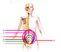 Votre ostéopathe à Paris 3 et à Paris 12 : Comprendre les changements de son corps lors de la grossesse